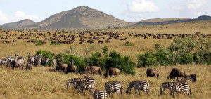 Animal Landscape on the Masai Mara